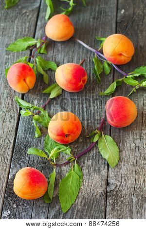 Fresh Apricots And Mint On A Wooden Background Vertically
