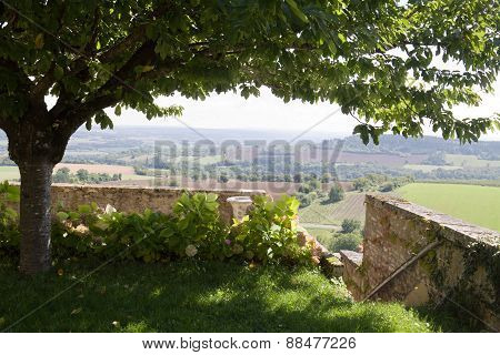 View On The Vezelay Hill With A Branchy Tree