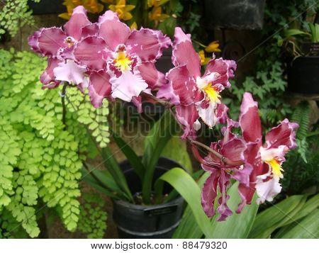 Pretty Purple, white, yellow Flowers