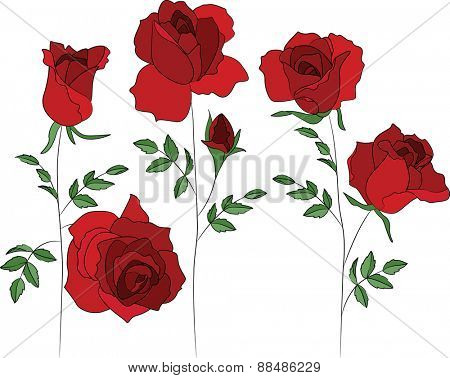 Contour red rose isolated on white.