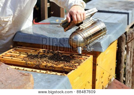 Smoking A Bee Hive