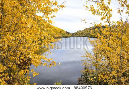 Aspen Forest over a Pond - Alaska