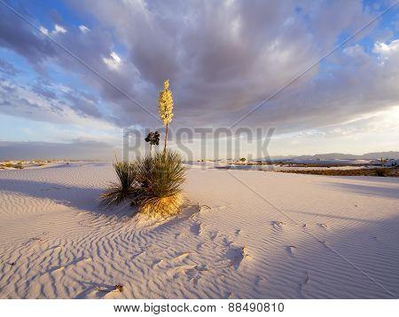 Morning On White Sands