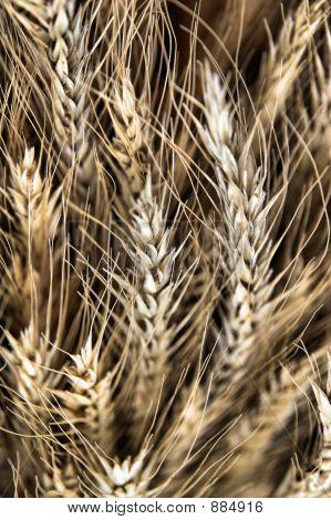 Wavy Grains