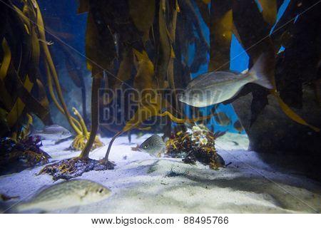 Fish swimming in a tank with algae at the aquarium