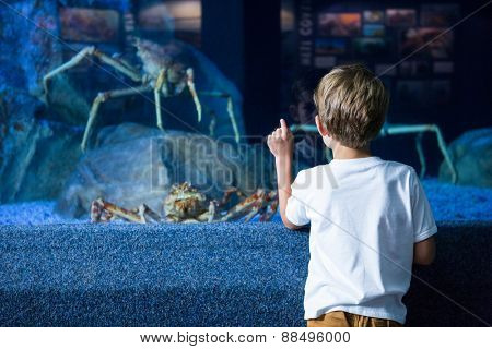 Young man pointing a giant crab in a tank at the aquarium