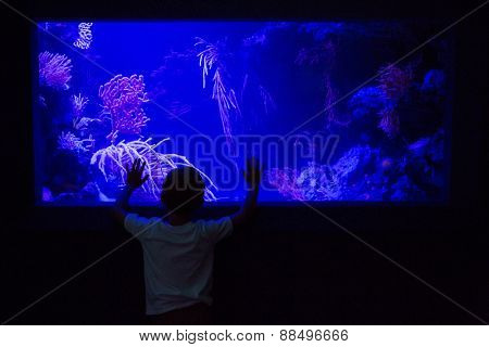 Young man touching an algae tank in a darkest room at the aquarium