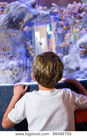 Young man looking at a fish in a tank behind camera at the aquarium