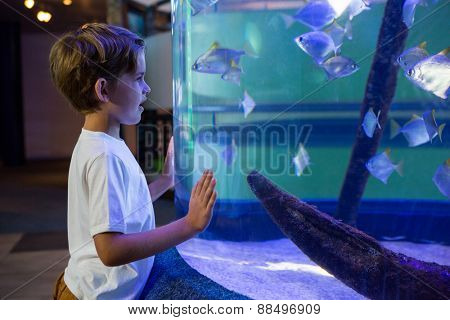 Young man looking at fish in a tank at the aquarium