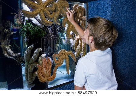 Young woman pointing a starfish-tank at the aquarium