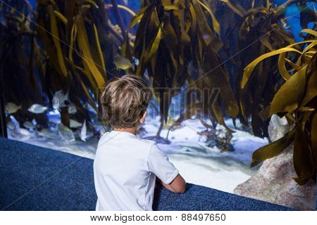 Young man looking at yellow algae in a tank at the aquarium