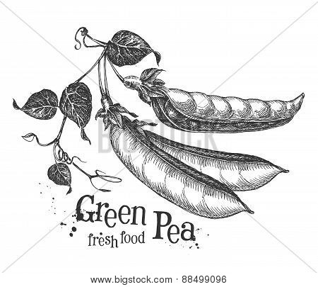 peas on a white background. sketch