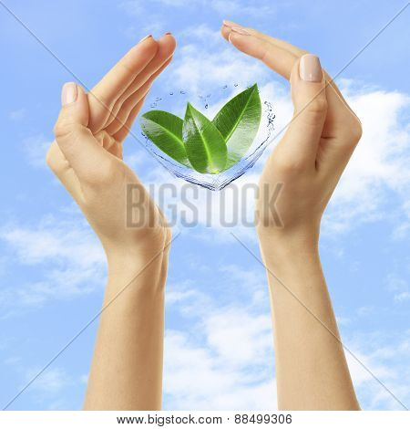 Female hands with green leaves on sky background