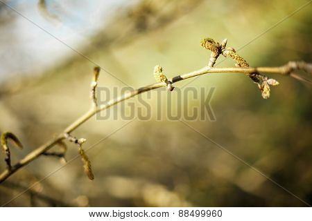 The Tree Branch
