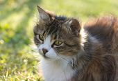 image of tame  - Cat against green background - JPG