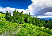 foto of path  - Mountain path in the Carpathian mountains - JPG