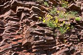 picture of shale  - Fragment of shale rock in the spring  - JPG