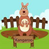 foto of kangaroo  - Illustrator of kangaroo in the zoo for education - JPG
