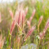 stock photo of spike  - The field of spikes at spring time - JPG