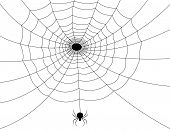 picture of spider web  - Isolated spider web with a spider illustration - JPG