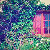 picture of house plants  - Window on the Facade of a Stone House Decorated with Plant in France Instagram Effect - JPG