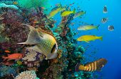 image of coral reefs  - Colorful underwater offshore rocky reef with coral and sponges and small tropical fish swimming by in a blue ocean - JPG