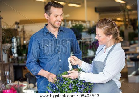 Female florist showing purple flower plant to male customer in shop