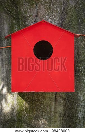 Red Birdhouse Against Beech Tree