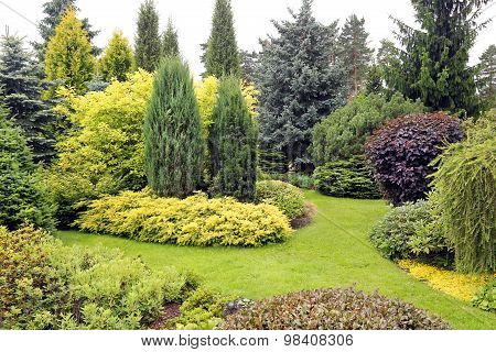 Beautiful Garden Landscape With Variety Of Conifers And Other Plants