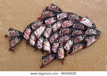 Big fish and sardines