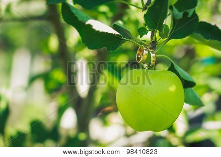Wedding Rings On The Green Apple