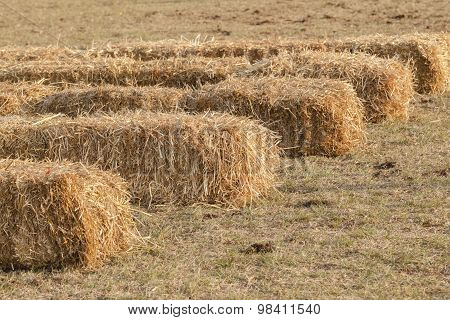 Farming Grass Bales