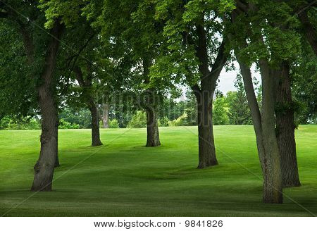 Trees On Grassy Incline