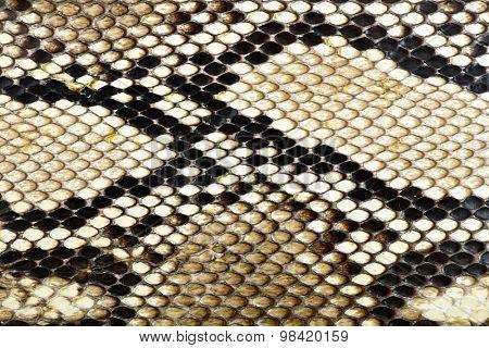 snake skin python for background