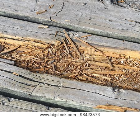 Rotting wood on boardwalk path
