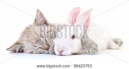 Kitten Playing With Rabbit