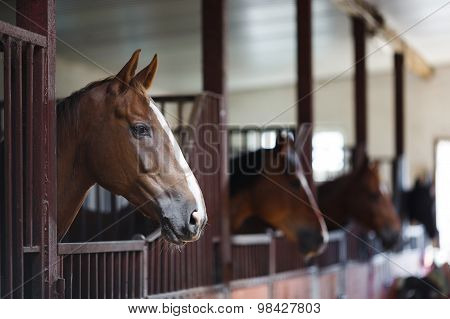 Horses In The Stable
