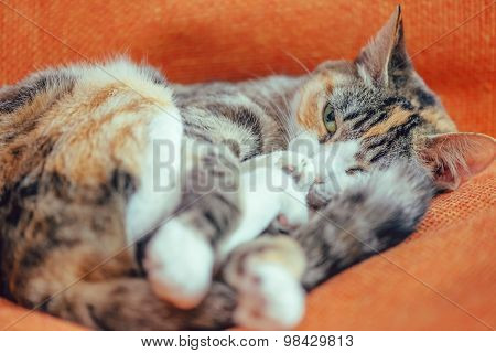 Cute Cat Of Tortoiseshell Color