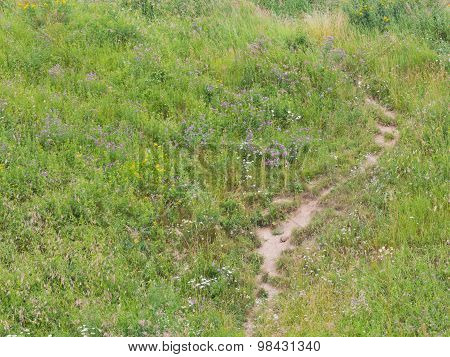 Path In The Field