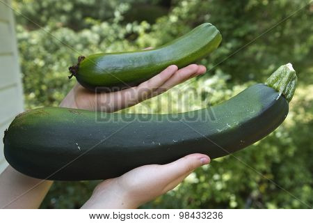 Mother Of All Zucchini