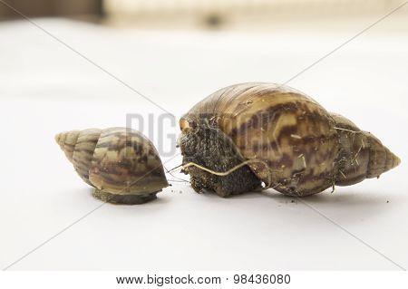 Snail Slow Animal Closeup Walk Nature Slime Concept