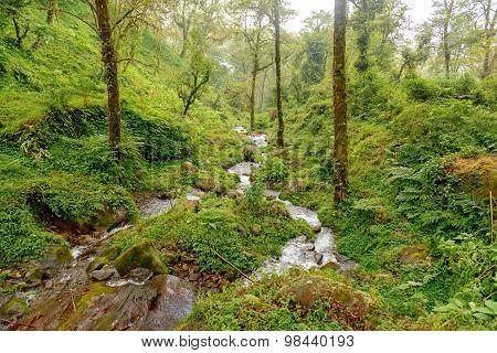 Rain forest in Sikkim, India