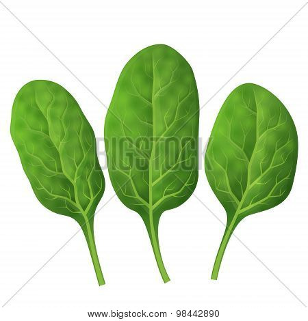 Spinach Leaves Close Up