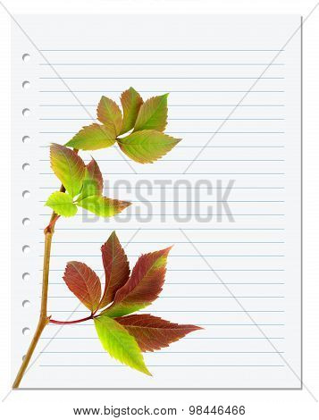 Exercise Book With Multicolor Virginia Creeper Twig