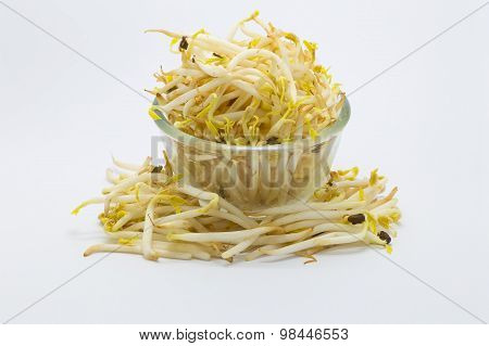 Bowl of Bean sprout on white