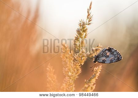 Butterfly at Sunrise