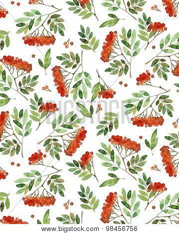 Watercolor pattern of rowan branch.