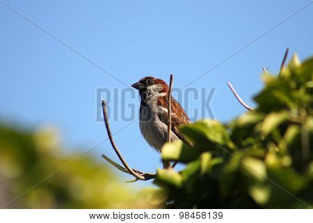 Emerging Sparrow