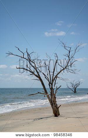 Oak trees at waters edge