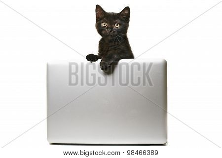 Black Kitten With Laptop
